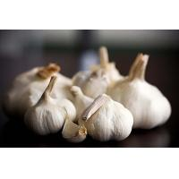 Buy cheap Chinese fresh white garlic good price product