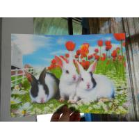 Buy cheap China OK3D RIP 3D technology PET 3D lenticular photo printing Poster-High definition lenticular 3d picture product