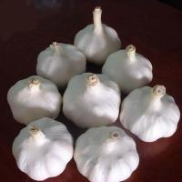 Buy cheap Organic pure white garlic and normal white garlic price per ton product