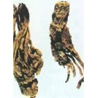 Buy cheap Angelica Root P.E product