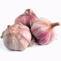 Buy cheap Wholesale New Product Chinese Vegetables Purple Garlic product