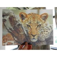 Buy cheap OK3D whole 3D animal Printing photo with strong 3d deep depth effect printed by UV offset printer product