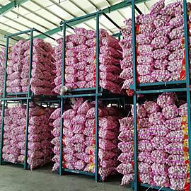 Buy cheap China purple garlic in 3p/net bag product