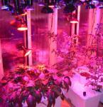 Buy cheap 90w LED grow light Hydroponic Fertilizer product