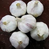 Buy cheap Cheap chinese normal white garlic for wholesales product