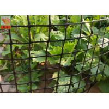 Buy cheap Heavy Duty Garden Fence , Garden Mesh Netting , Black Color , HDPE Materials , 50 CM High product