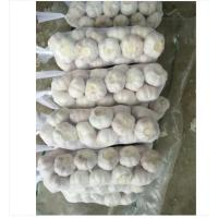 Buy cheap Fresh Garlic And Ginger Fresh Garlic Packaging Single Clove Garlic Braids product