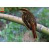 Buy cheap Black Color Anti Bird Garden Mesh Netting  , Bird Proof Netting For Fruit Trees product
