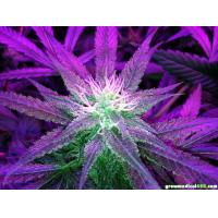 Buy cheap shenzheng gehl factory do led grow lights work for greenhouse product
