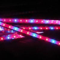 Buy cheap Hot Sale Panel 300W LED Grow Light for Indoor Lighting from wholesalers