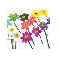 Buy cheap Unique Dried Flower Art Multi Color Teaching Specimens Plants For 3D Art Painting product