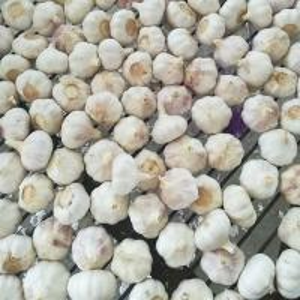 Buy cheap Fresh Chinese Normal White Garlic product