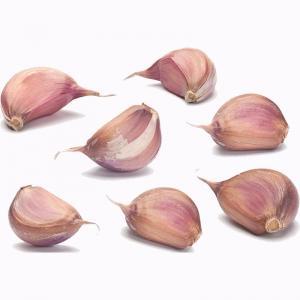 Buy cheap 2019 New Season Top Quality Purple Garlic product