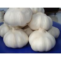 Buy cheap High Quality New Crop/Fresh Garlic - Chinese Shandong Garlic product