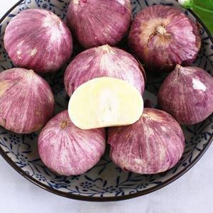 Buy cheap New Crop Fresh Garlic Purple Skin(4kg/mesh bag) product