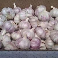Buy cheap Quick Freezing Fresh Garlic product