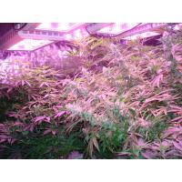 Buy cheap Grow lights to electronic Ballast 600w product