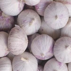 Buy cheap Fresh Garlic Single Clove product