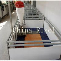 Buy cheap High quality pig equipment nursery crates product