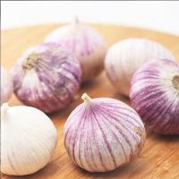 Buy cheap Purple Garlic for sale ready to export from China season 2019 product