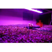 Buy cheap 2012 Detachable Power LED Grow Light for Hydroponics product