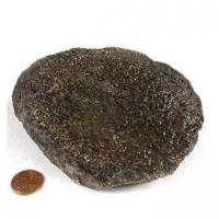 Buy cheap Authentic Fossils Dino Bone Rough product