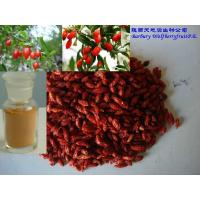 Buy cheap Barbury Wolfberry fruit P.E. product
