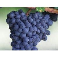 Buy cheap Anthocyanins Grape seed extract product