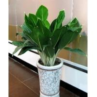 Buy cheap plant series 201512619952 product