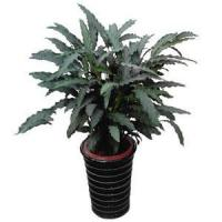 Buy cheap plant series 2015126191523 product