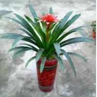 Buy cheap plant series 2015126193248 product