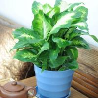 Buy cheap plant series 2015126192415 product