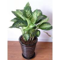 Buy cheap plant series 2015126191940 product