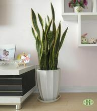 Quality plant series 201512619567 for sale