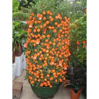 Buy cheap plant series 2015126194936 product