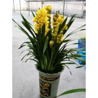 Buy cheap plant series 2015126194159 product