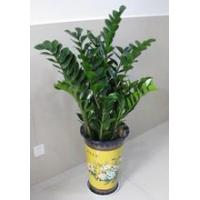 Buy cheap plant series 2015126195749 product