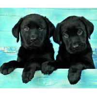 Buy cheap 5B81 Two Black Labradors (for 6 cards) product