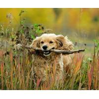 Buy cheap 5B74 I`ve got a stick, a natural picture of man`s best friend. (for 6 cards) product