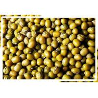Buy cheap Green Mung Beans from wholesalers