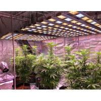 Excellent Quality Full Specrum LED Plant Grow Lights